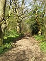 Track to Scragged Oak - geograph.org.uk - 162041.jpg