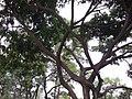 Tree - panoramio (44).jpg