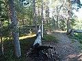 Tree fallen between two trees in Inari.jpg