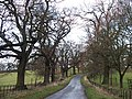 Tree lined road - geograph.org.uk - 1609345.jpg