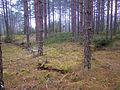 Treudd (RAÄ-nr Västerfärnebo 17-1) Ö udden 4847.jpg