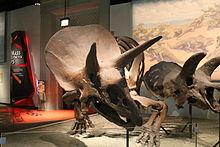 Triceratops. (7532870752).jpg