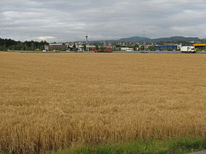 Pytheas - Grain field in modern Trondheim, Norway