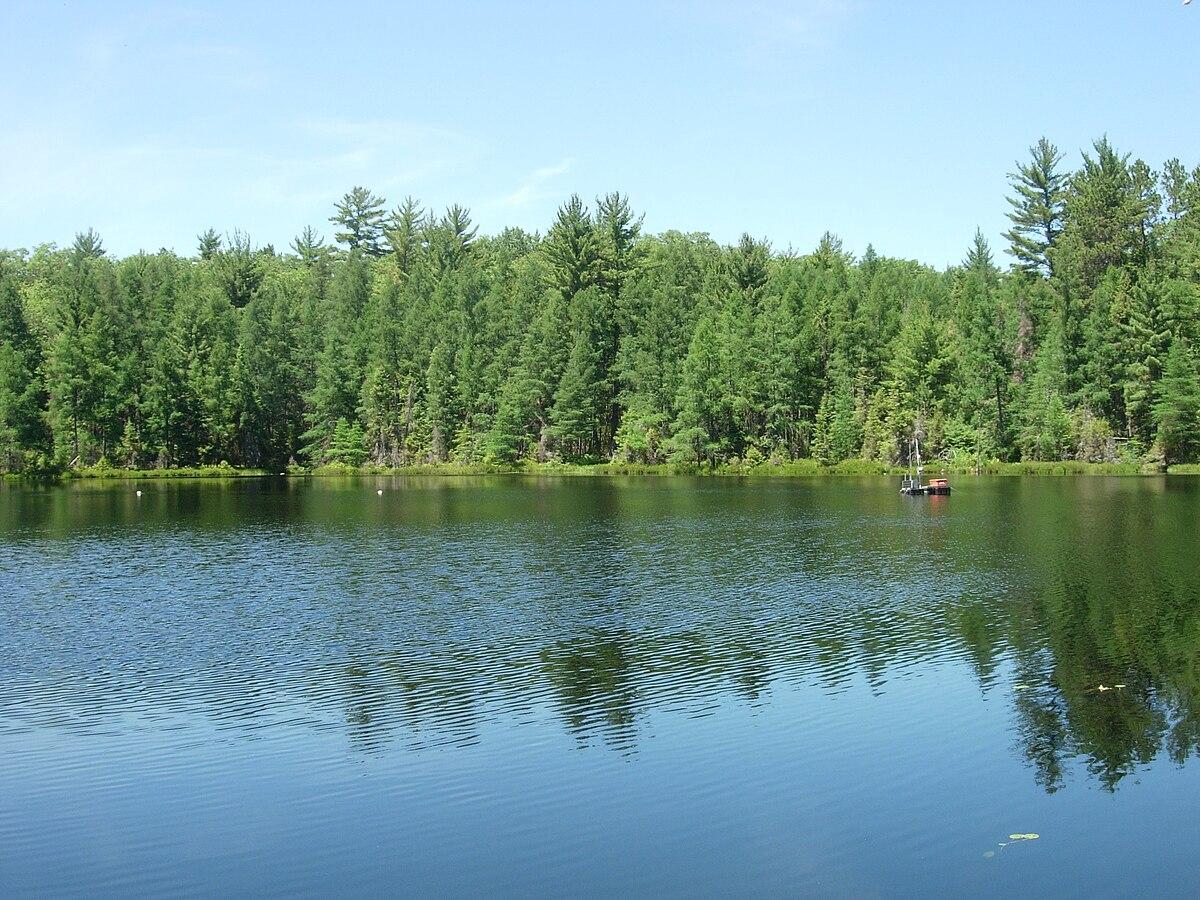 trout bog lake  vilas county  wisconsin