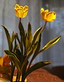 Tulips on a Table (14058515943).jpg