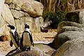 Tulsa Zoo's African Penguin Exhibit.JPG