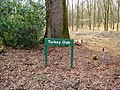 Turkey Oak signage Savernake Forest - geograph.org.uk - 344485.jpg