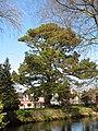 UCC, Cork, 12.4.14 - panoramio (10).jpg
