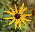 UMFS 2015 Flower 2.jpg