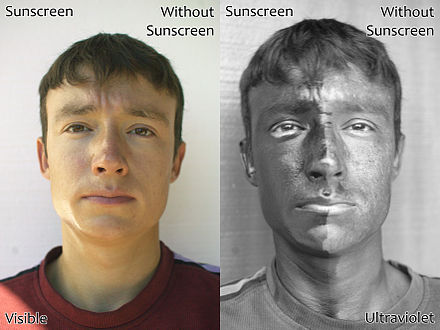 Demonstration of the effect of sunscreen. The man's face has sunscreen on his right only. The left image is a regular photograph of the face; the right image is taken by reflected UV light. The side of the face with sunscreen is darker because the sunscreen absorbs the UV light. UV and Vis Sunscreen.jpg