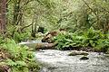 Umia River by Caldas de Reis, Galicia, Spain-8.jpg