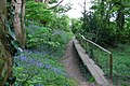 Unusual path in Shotover Country Park - geograph.org.uk - 414286.jpg