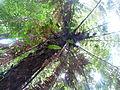 Vegetación de la Reserva de la Biosfera La Amistad Panama (RBLAP) 03.JPG