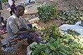 Vendeur de médicament traditionnel à Ferkessédougou 01.jpg