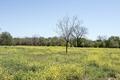 View of Johnson Nature Park in Lampasas, Texas LCCN2014633155.tif