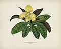 Vintage illustrations by Benjamin Fawcett for Shirley Hibberd digitally enhanced by rawpixel 79.jpg