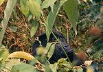 Virunga Milli Parkı, Demokratik Kongo Cumhuriyeti