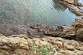 Vivier maritime de la Gaillarde à Roquebrune-sur-Argens le 10 février 2017 - 09.jpg
