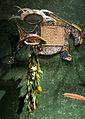 WLANL - Pachango - Tropenmuseum - Verenvitrine Suriname.jpg