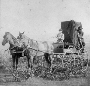 William Pywell - William Pywell on Expedition, Pywell is driving the wagon.