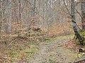 Wanderweg beim Naturdenkmal 81150290001 Alter Steinbruch - panoramio.jpg