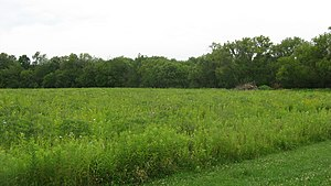 John Chapman Village Site - Image: Wapello Land and Water Reserve