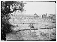 War cemetery in Palestine (probably Gaza) LOC matpc.08241.jpg