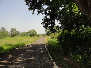 Ratapani Tiger Reserve - The road that goes inside the jungle