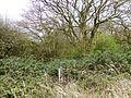 Weldon Park 2.jpg