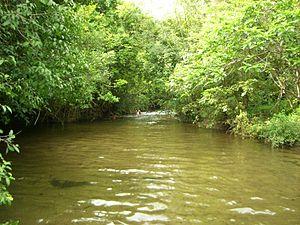 Ayyanar Falls - A remote stream near Ayyanar Kovil