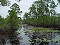 Wetland swale on Perdue Unit (8904422895).jpg