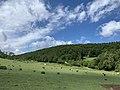Weyrer Wald und Hahnenberg (1).jpg