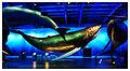 Whales of Iceland (Reykjavik museum) (20434432050).jpg
