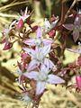 White Flowers5.jpg