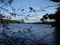 Widok z dołu skarpy na jezioro - kierunek Złotów. - panoramio.jpg