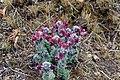 Wild flower1.jpg