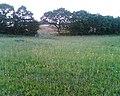 Wild flower meadow - geograph.org.uk - 253111.jpg