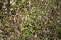 Wild flowers in a forest near Olgino 2020-09-13-5.jpg