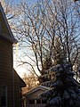 Winter sunlight on icy trees Summit NJ.JPG