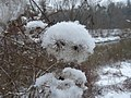 Winterflower1101 - panoramio.jpg