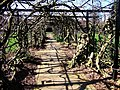 Wisteria pergola, Pince's Gardens, Exeter - geograph.org.uk - 343808.jpg