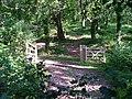 Woodland Path - geograph.org.uk - 376408.jpg