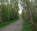 Woodland in Beacon Hill Country Park - geograph.org.uk - 409996.jpg