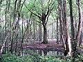 Woodland pond - geograph.org.uk - 451916.jpg