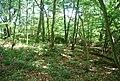 Woodlands, Redhill Woods - geograph.org.uk - 856666.jpg