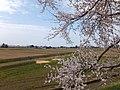 Yatsuomachi Nishijinzu, Toyama, Toyama Prefecture 939-2311, Japan - panoramio (8).jpg