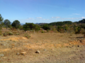 Yellowish Ground in El Salvador.png