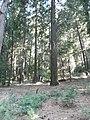 Yosemite 2011 (5994751207).jpg