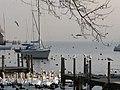 Zürich - Hafen Riesbach IMG 1578.JPG
