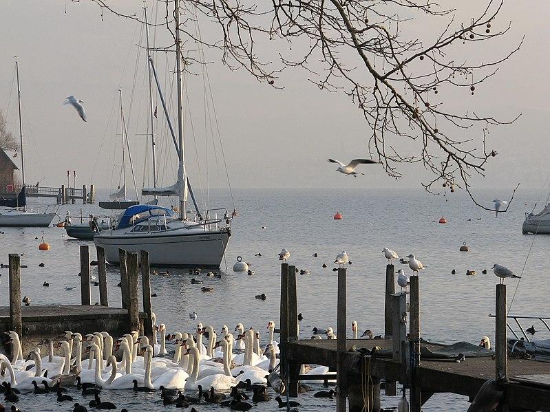 File:Zürich - Hafen Riesbach IMG 1578.JPG